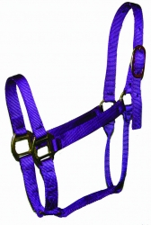 Traditional Halters